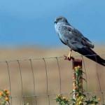 El Ave que cuida las Aves