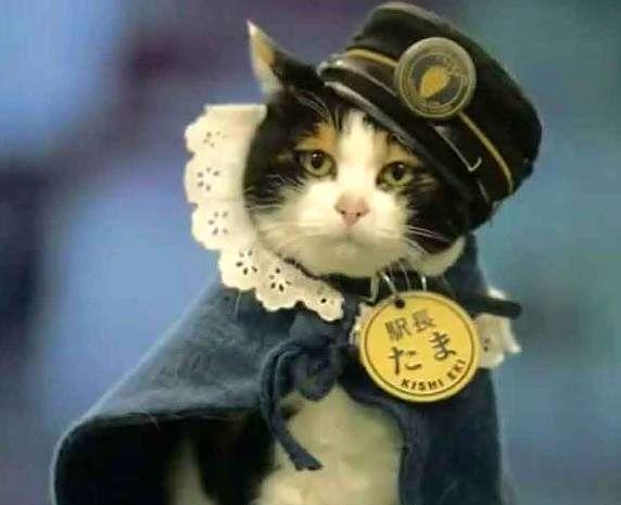 Tama, la gata Jefe de Estación_01