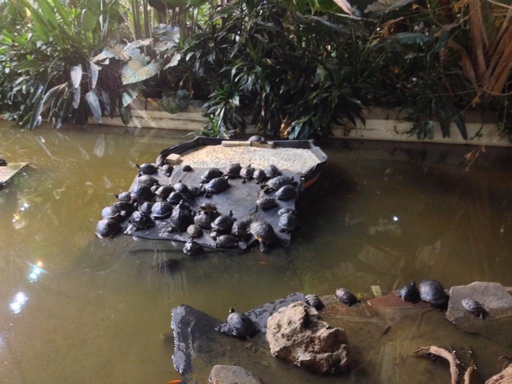 Alarma por las tortugas can bales en el jard n tropical de for Jardines de la puerta de atocha