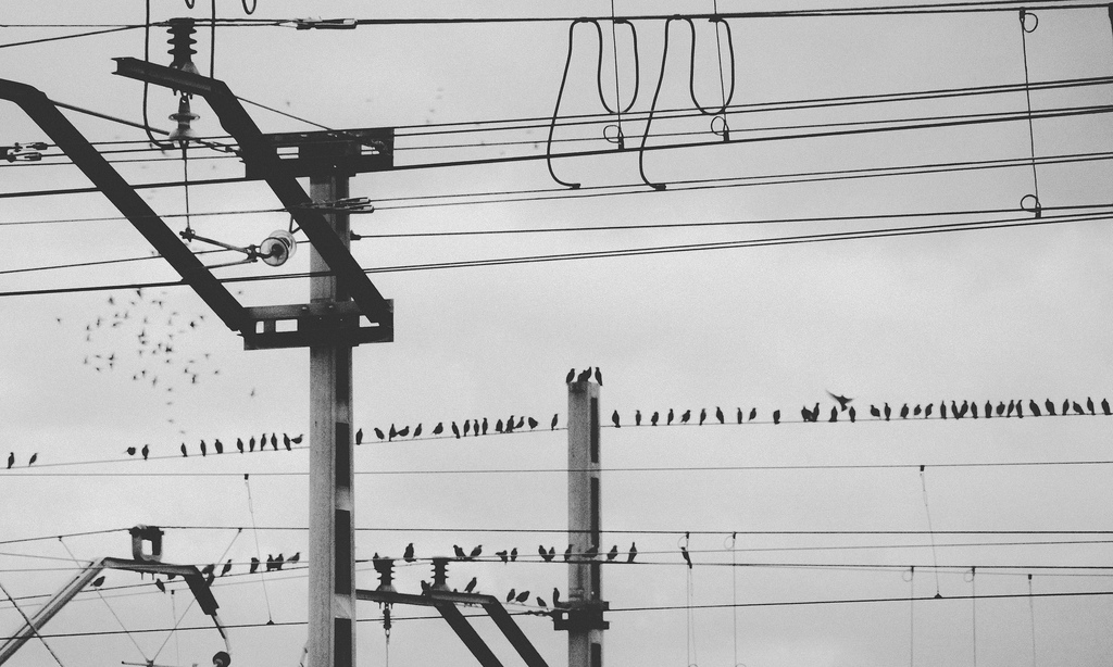 Pájaros en la catenaria